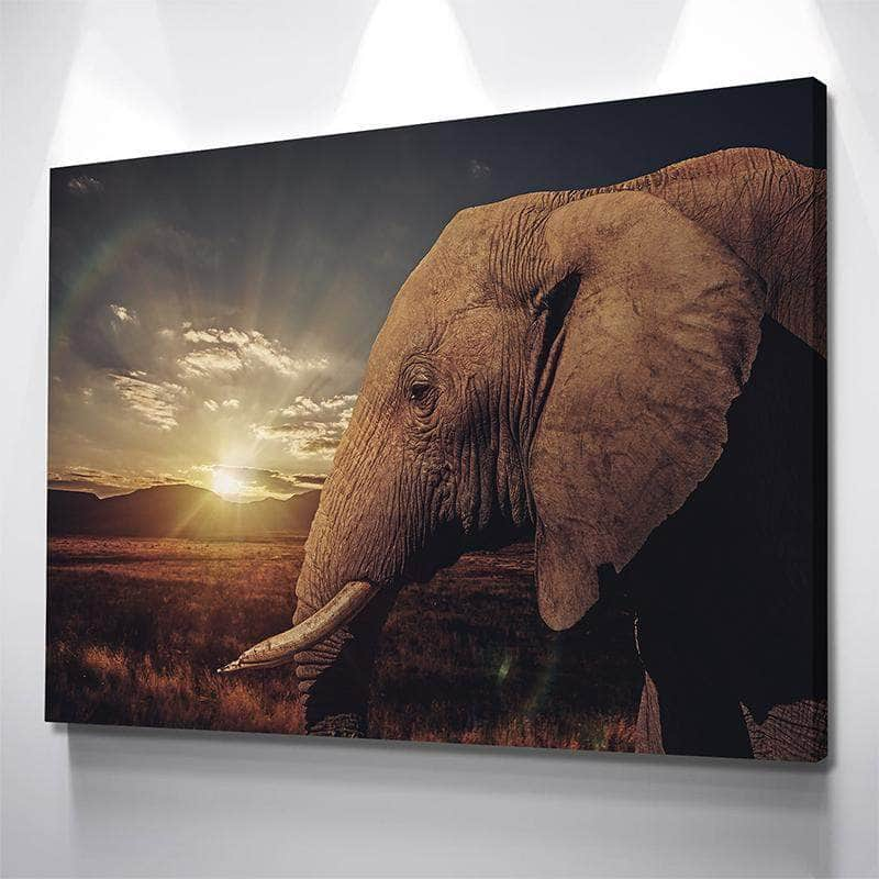 Elephant Gaze Canvas Set
