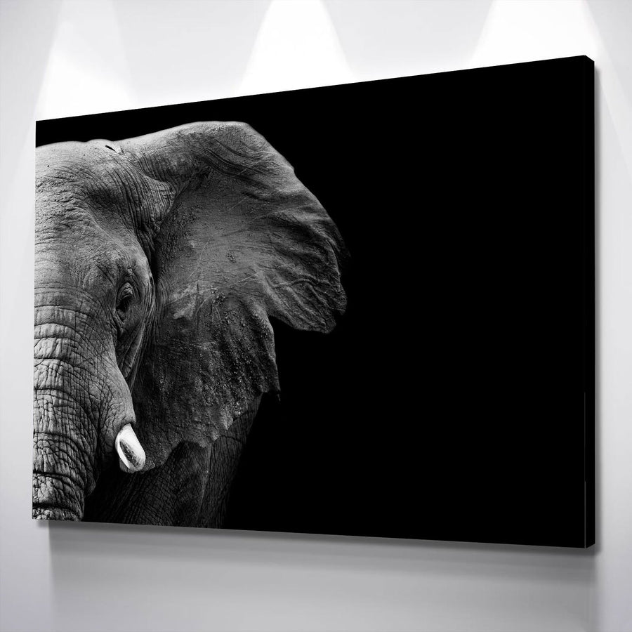 Gaze of an Elephant Canvas Set