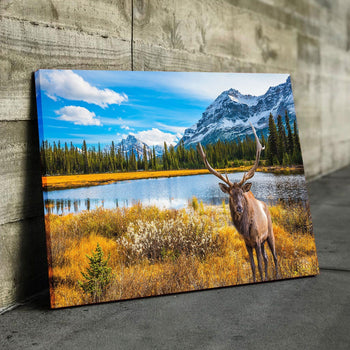 Moose French Canada Canvas Set