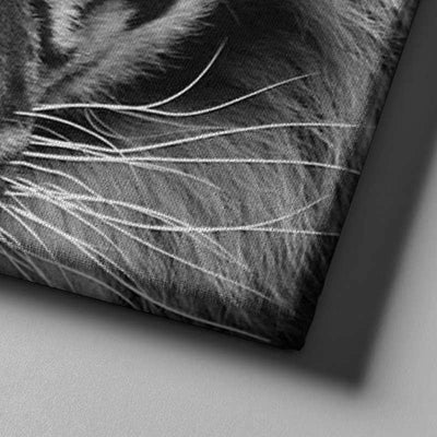 Blue Eyed Tiger Canvas Set