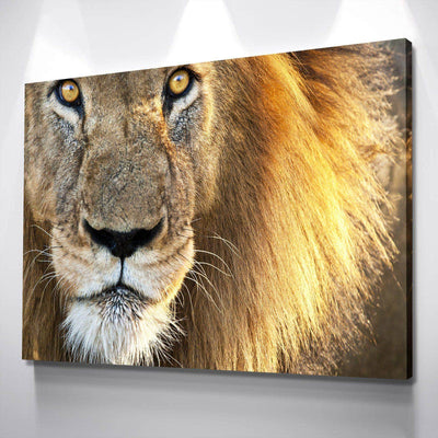 Ferocious Lion Canvas Set