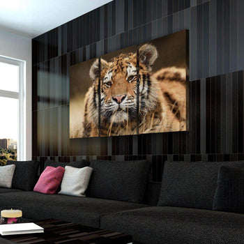 Tiger's Stare Canvas Set