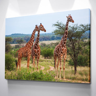 Giraffes Canvas Set