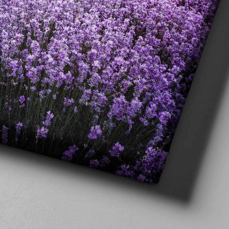 Lavender Field Canvas Set