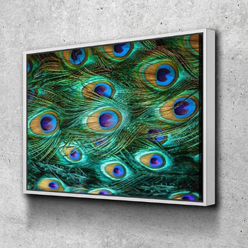 Peacock Feathers Canvas Set