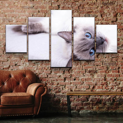 Ragdoll Cat Canvas Set