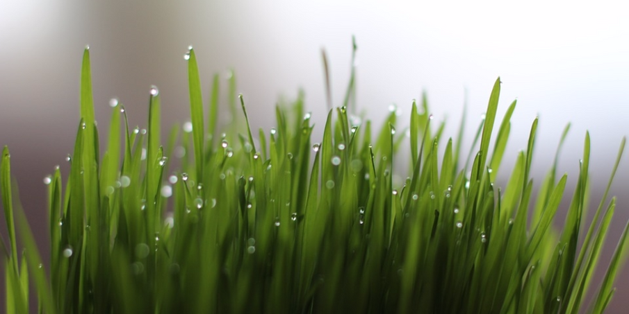 Why Should I Include Wheatgrass Powder in my Diet?