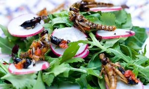 Vegetarians and Vegans eating insects...Is there a grey area?