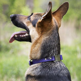 dogIDs - Water and Odor Repellent Soft Grip Collar with ScruffTag - Personalized