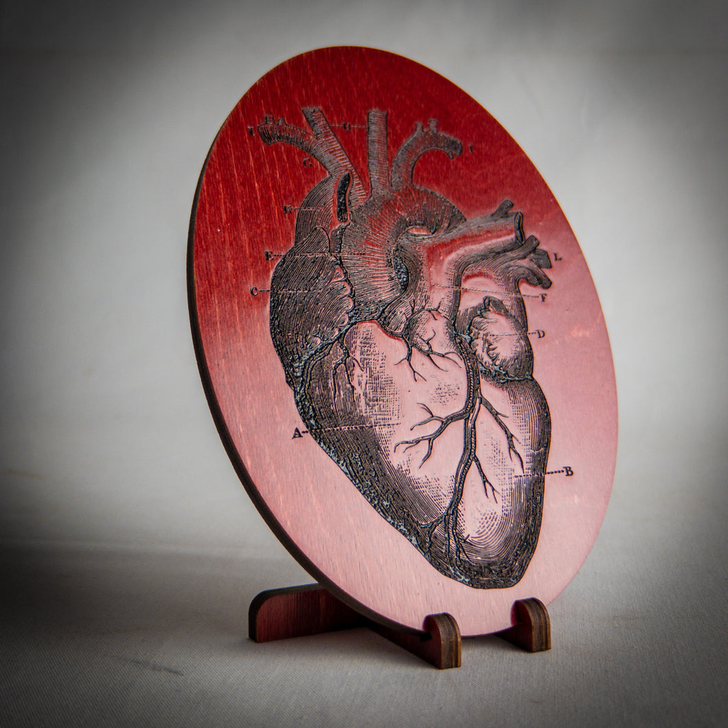 Anatomical Heart Engraving Art - Tabletop Artisans