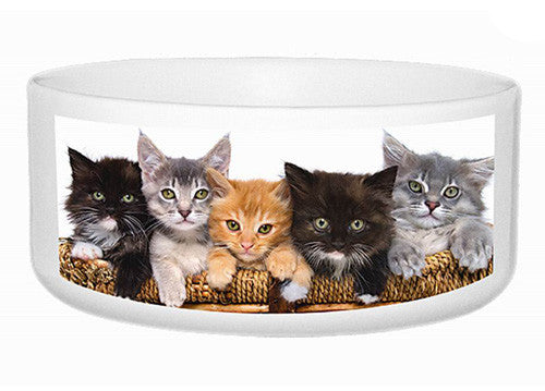 My Special Cat Bowl