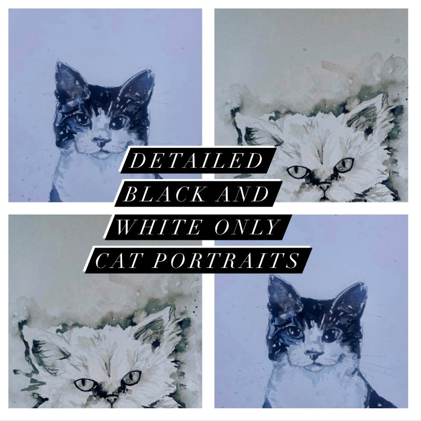 Pet portrait, detailed black and white cat portrait, no colour