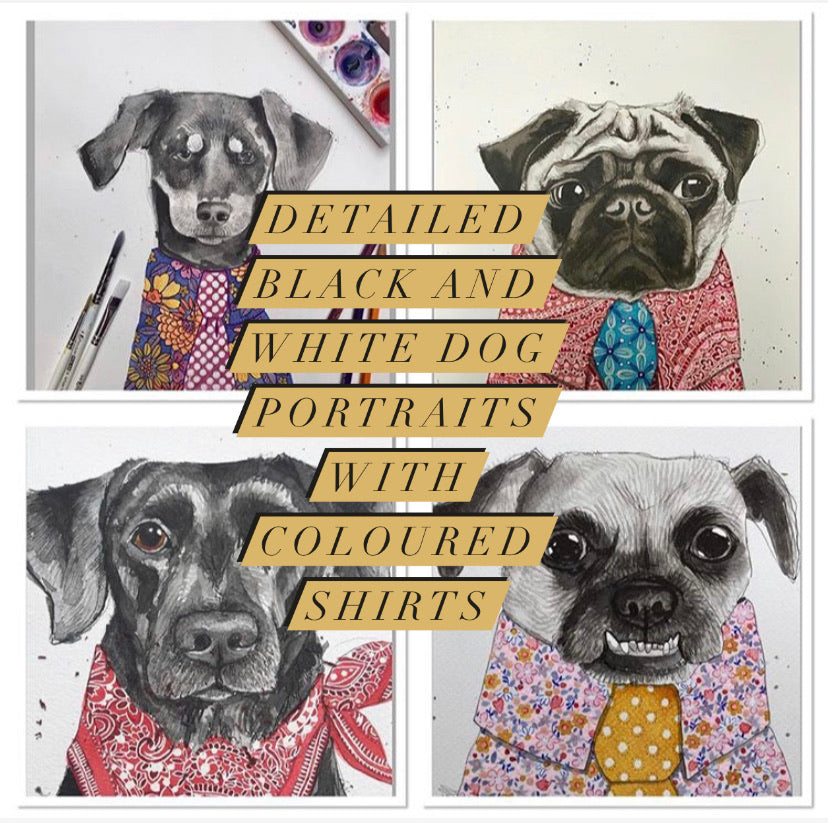 Pet portrait, black and white dog portrait with coloured shirt