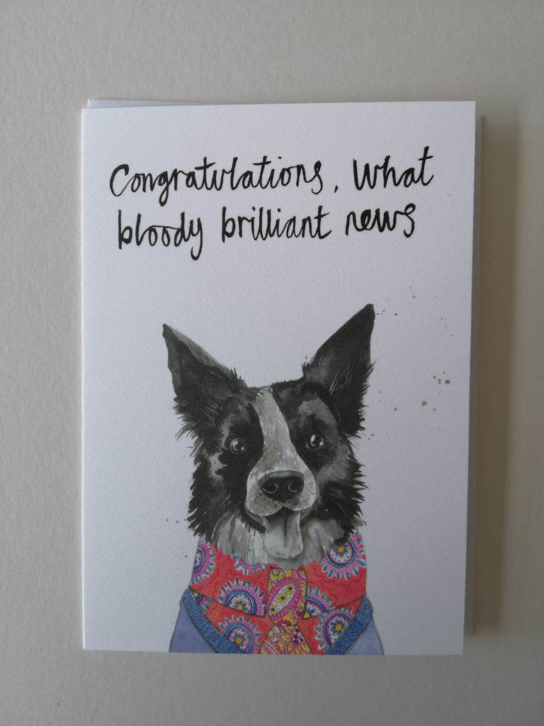 Cards, AS26CONGRATS, Bazzle the collie 'Congratulations what bloody brilliant news'