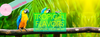 Tropical Flavors Week