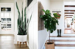 Why Indoor Plants are Exactly What you Need this Autumn