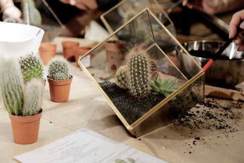 terranium-workshop