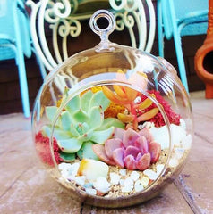 terrarium-plant-workshop