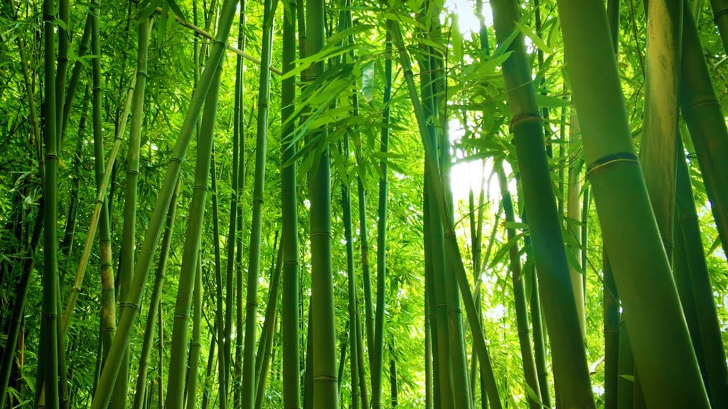 bamboo-ethics-sustainability