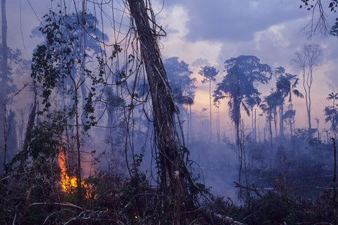 amazon-rainforest-fires-how-to-help