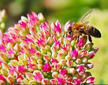 3 tips for creating a bee friendly garden