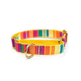 Colourful Stripes Martingale Collar