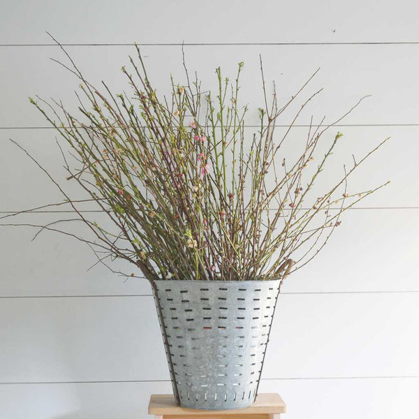Antique Olive Bucket with Branches