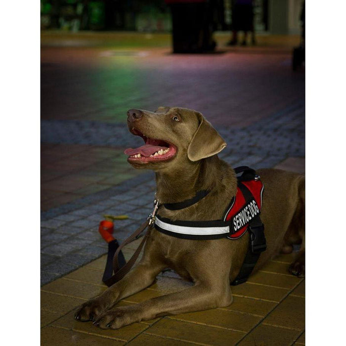 Alpha Multi-Purpose Harness