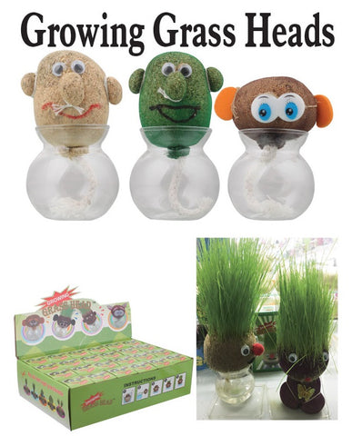 Growing Grass Head Plant Education Toy