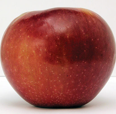 Connell Red Apple Photo Courtesy of Bailey Nurseries