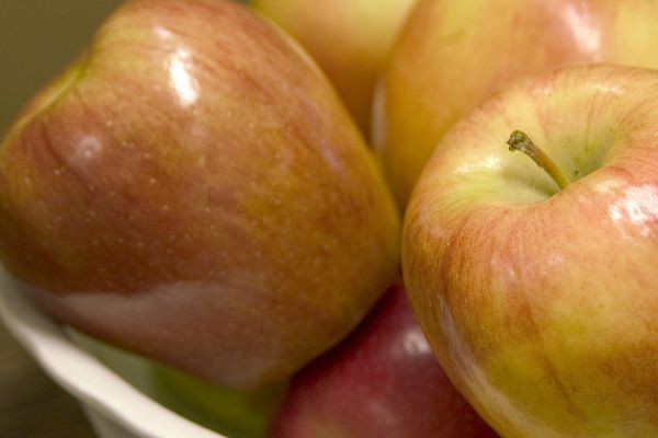 Honeycrisp Apple For Sale | Shop Stuart's-Photo courtesy of Bailey Nursery