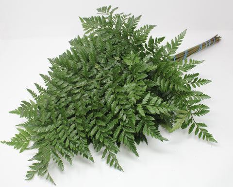 Leatherleaf - 25 pack