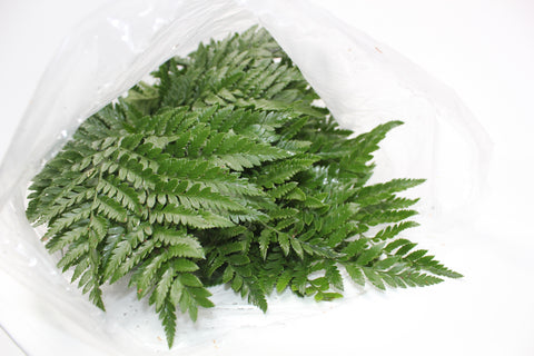 Leatherleaf Sleeved - 25 pack