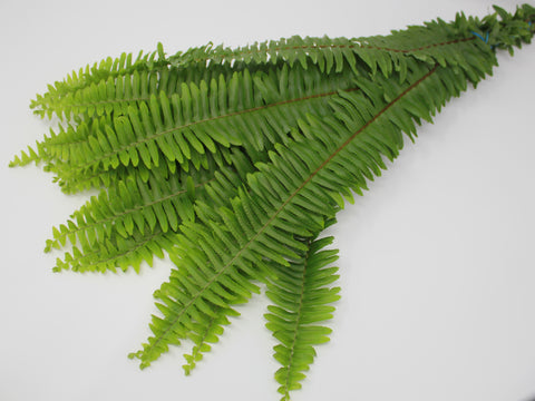 Sword Fern - 10 pack
