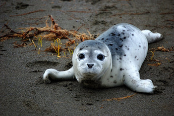 Save Our Seals