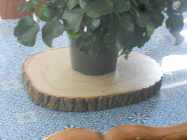 "13"" by 11.5"" Tree slice display stand, rustic table center piece, flower pot holder"