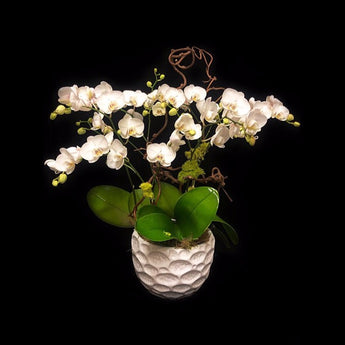 6 stems small paddle phalaelopisis arrangement.