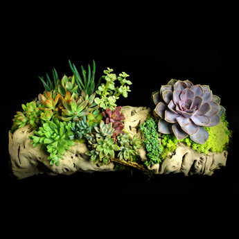 Grapevine wood with succulent arrangement