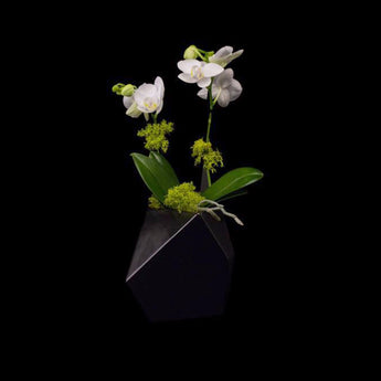 One small phalaenopsis in modern vase