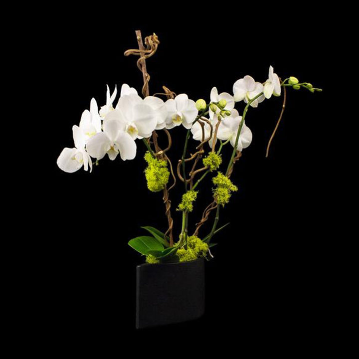 4 stems white phalaenopsis in simple container.