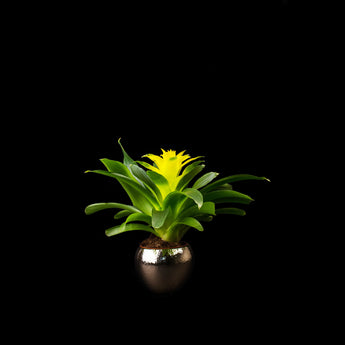 Bromeliad in Gold vase
