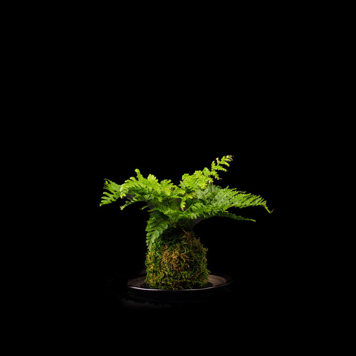 Moss ball with green plant on bamboo stand