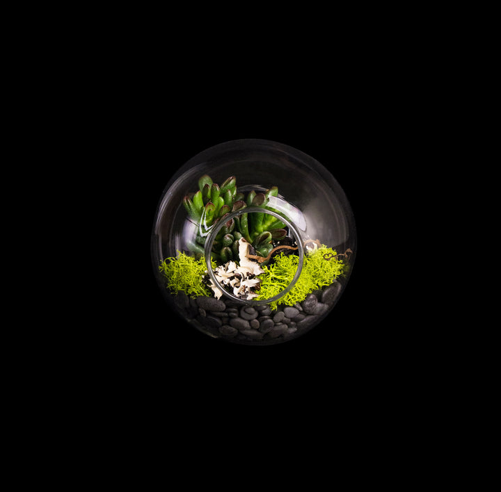 Succulent in glass ball