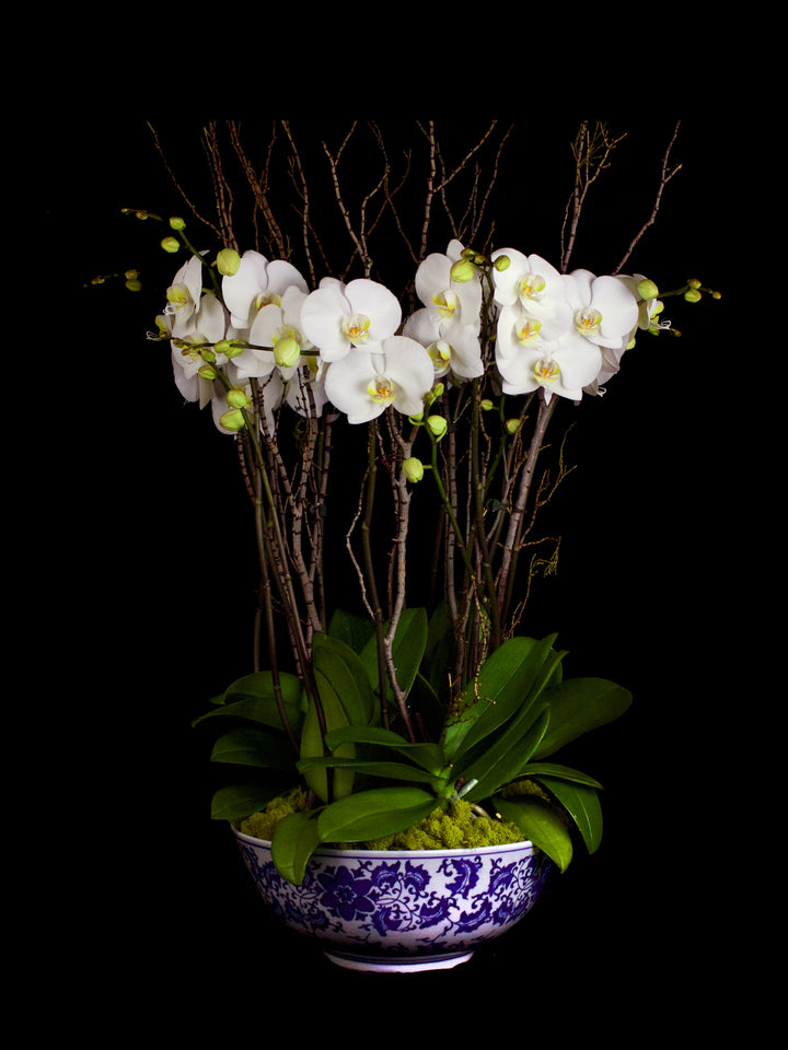 12 stems White Phalaenopsis in an antique style bowl.
