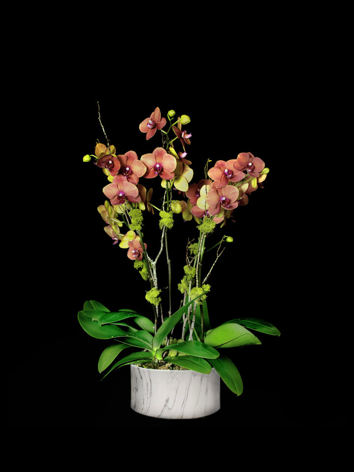 Marble container with orange phalaenopsis