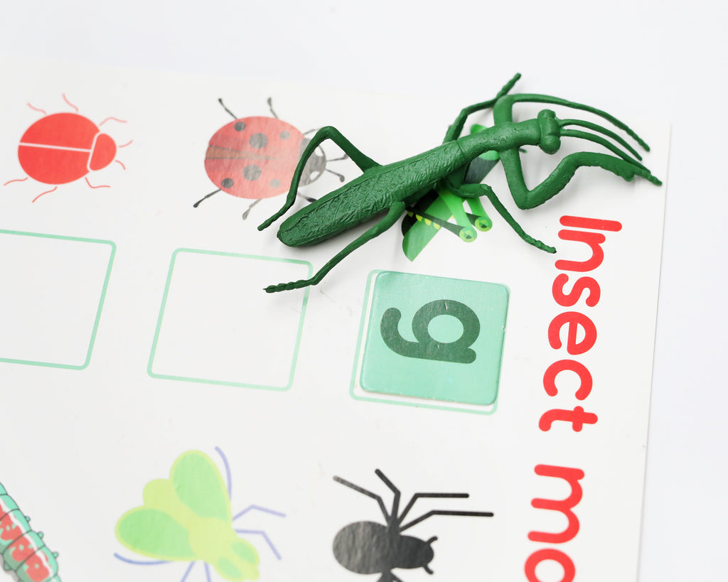 Little Learners Insects Creative Box