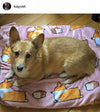 Pink Loaf Cardigan Corgi Fleece Blanket | 3 Sizes