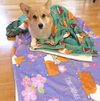 Watermelon Corgi Fleece Blanket | 3 Sizes