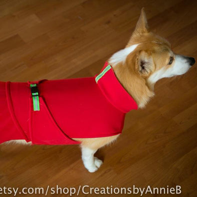 The Ultimate Corgi Coat