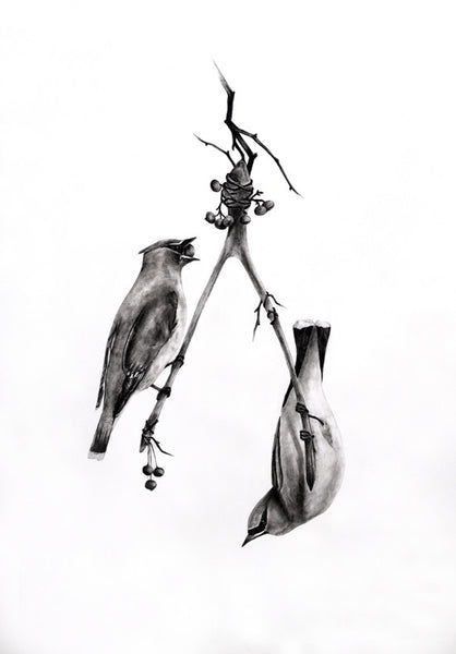 Stephanie Mah is a Saskatoon artist that drawings hyper realistic artworks of birds